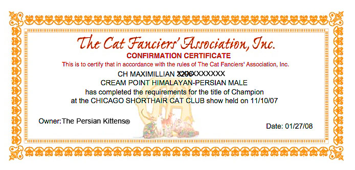Persian Cats CFA Champion