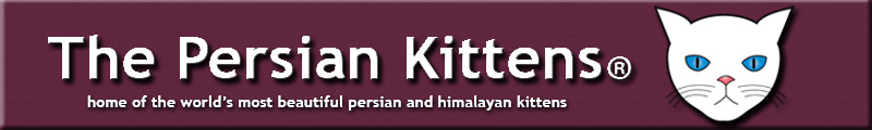 Pictures Persian Kittens