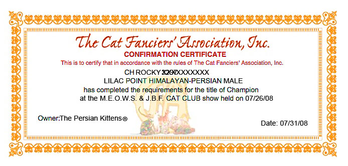 Pictures of Persian Kittens CFA Champion
